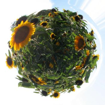 Sunflower Planet by Veraclash
