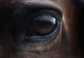 Horses eye by LittleBuckaroo-Stock