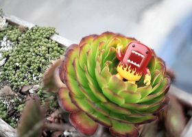 Tweaked out Domo in a succulent by bluedogsd