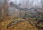Autumn forest 2 by ohlopkov