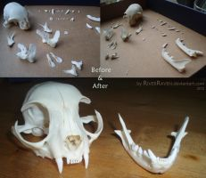Cat skull collage by RiverRaven