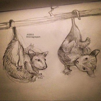 Possums by MirraGray