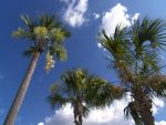 .: Towering Palms :. by Dunkin-Prime