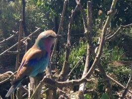 This beautiful bird was at the zoo by ThePurpleElf