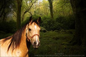 Buckskin in Woods by PS-Graphics
