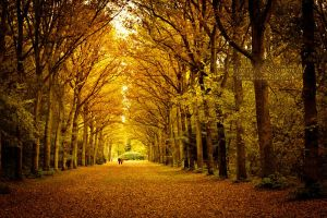Autumn forest by TammyPhotography