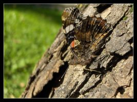 Butterfly 5 by 99-in-the-shade