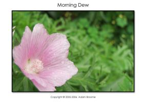Morning Dew by Adamb22