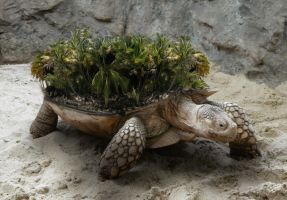 Island Tortoise by eggoverlord