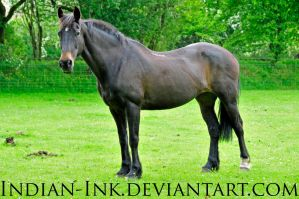 Seal Brown Friesian Mix 5 by Indian-Ink