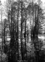 Water Trees by Jaclav
