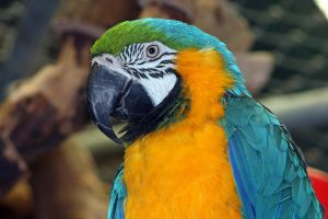 Parrot by Mitera