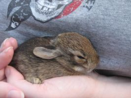 Baby Bunny 1.:Stock:. by SparrowsFlame-Stock