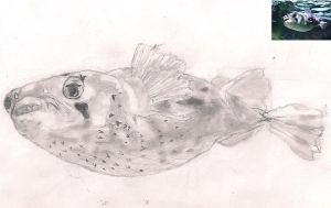 Porcupinefish from Photo by ToxicWyvern