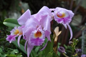 Orchid by DandyStock