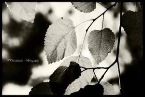 Opportunities... by toluno