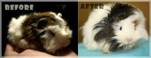 chestnut before-after by mellemichellelatif