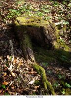 Tree Stump 28 by AnitaJoy-Stock