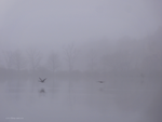 Fog  with geese flying by Mogrianne