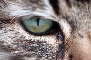 cat eye by julietonnesen