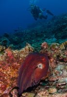 Octopus and diver by leighd