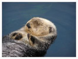 Otter I by ThatPhotograph