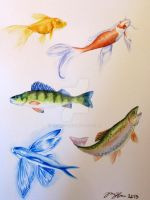 Fish Sketches by Remigis