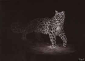 Snow leopard on black by Kivuli