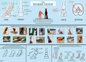 Basic horse hoof tutorial by pookyhorse