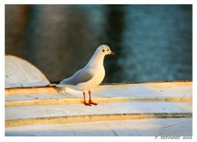 seagull by bracketting94
