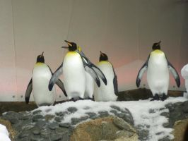 King Penguin4-Stock by SilkenWebs