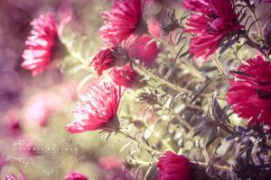 Pink Fairytale by Sophie-Wieland