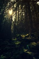 Forest by MirdautasVrasS