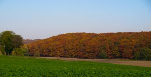 Colours of autumn by schlafengehen