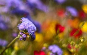 ...rainbow meadow... by jsz