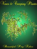 Vines and creeping plants PNG pack by kayshalady