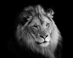 The King by IloveMcL
