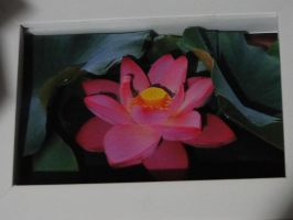 Lotus Decoupage by bslirabsl
