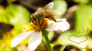 Bee on a Flower by LuciaJade