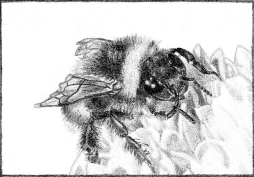 Little Bumble Bee by O-O-P