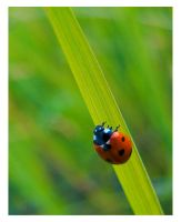 lady bug mamara by Cupra0607R