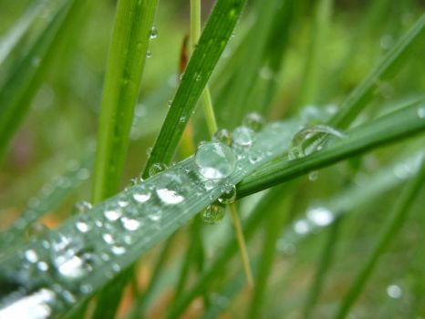 Droplets by PepperLady