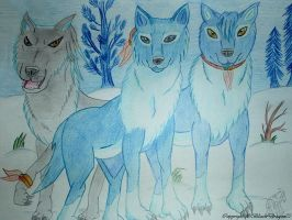 Finnish Wolf pack by BlackDragon07