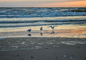 13-03 Sea Gulls Sunrise by evionn