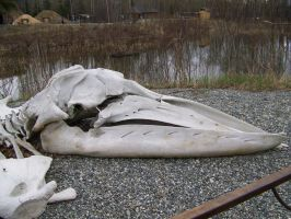 whale skull by Just-A-Little-Knotty
