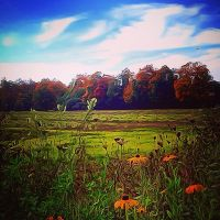 Autumn Field by copper9lives