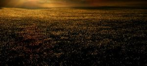 Golden Grass by ToryHartley