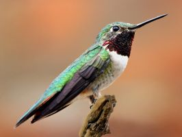 About to Flash by papatheo