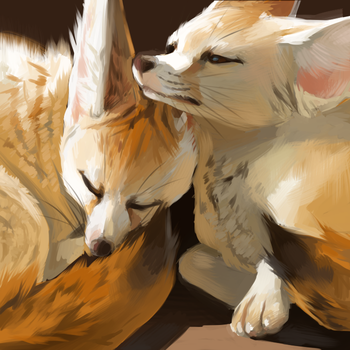 Fennecs by skullcaps