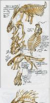 Hup creature concept pile. by Scarlet-Harlequin-N